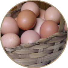 Jehovah-Jireh Farm: Local, pasture-raised meats and eggs