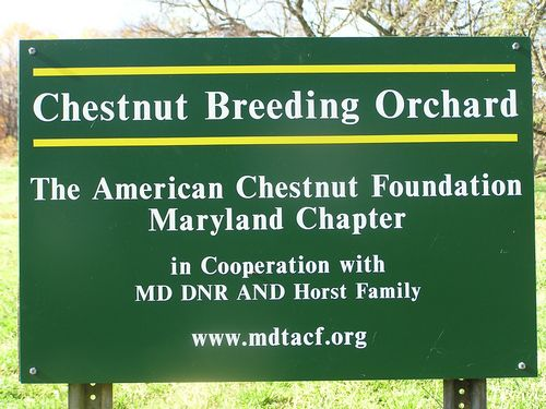 Chestnut orchard sign